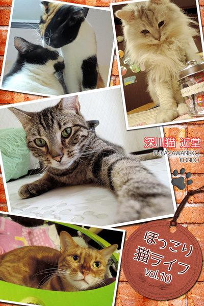 ほっこり猫ライフ vol.10写真集