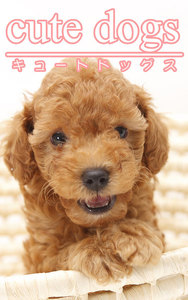 cute dogs01 トイプードル 電子書籍版