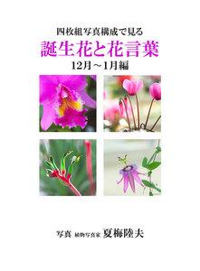 四枚組写真構成で見る誕生花と花言葉12~1月編