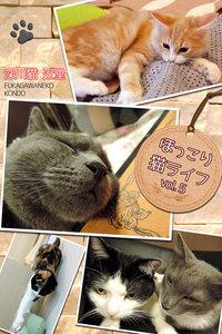 ほっこり猫ライフ vol.5