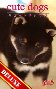 cute dogs DELUXE02 柴犬