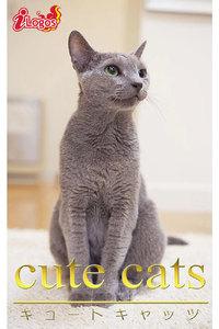 cute cats09 ロシアンブルー 電子書籍版