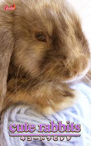 cute rabbits03 ミニロップ 電子書籍版
