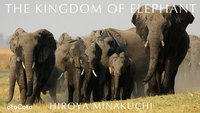 THE KINGDOM OF ELEPHANT